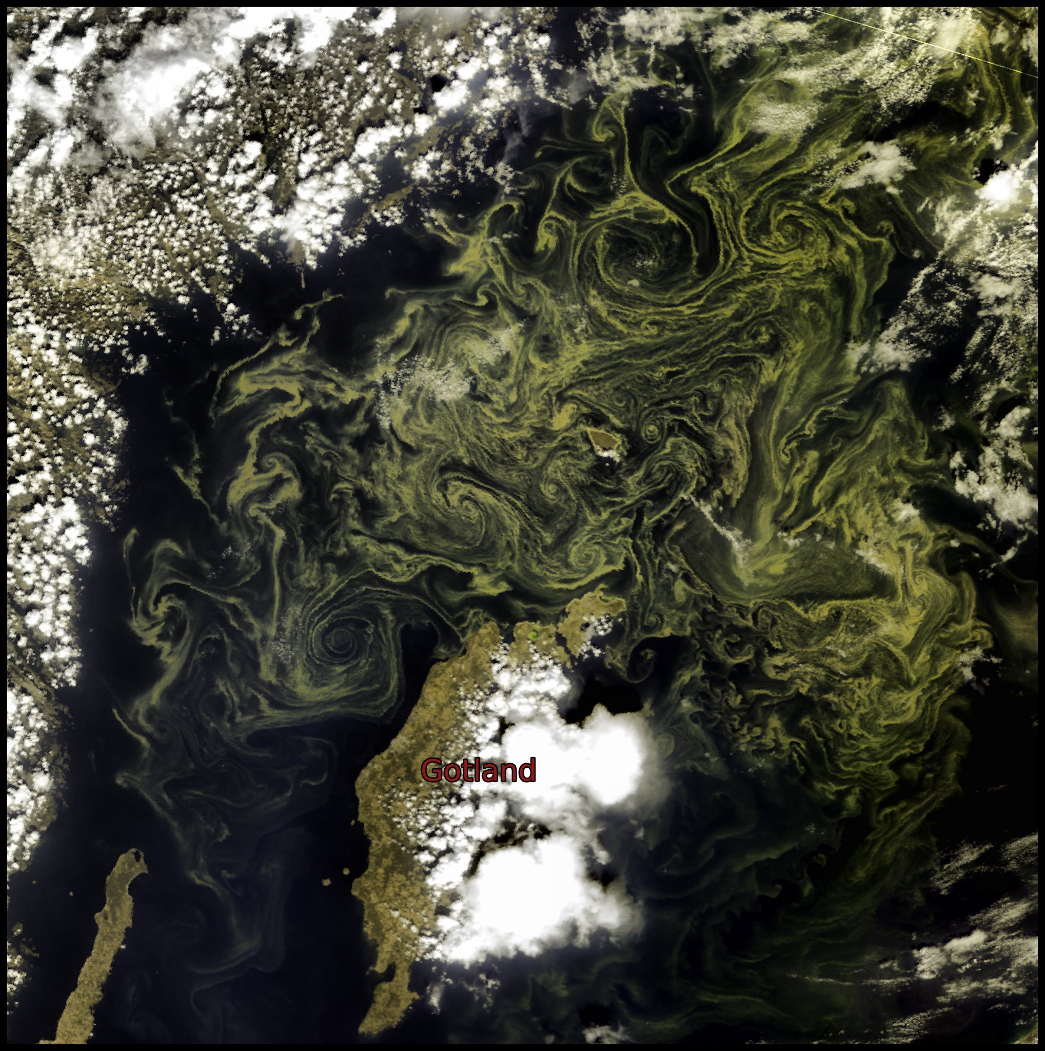 A Red-Green-Blue composite made using measurements of light at wavebands specific to the OLCI sensor, showing green cyanobacteria blooms in the middle of the Baltic sea on 9 August, 09:25 UTC.
