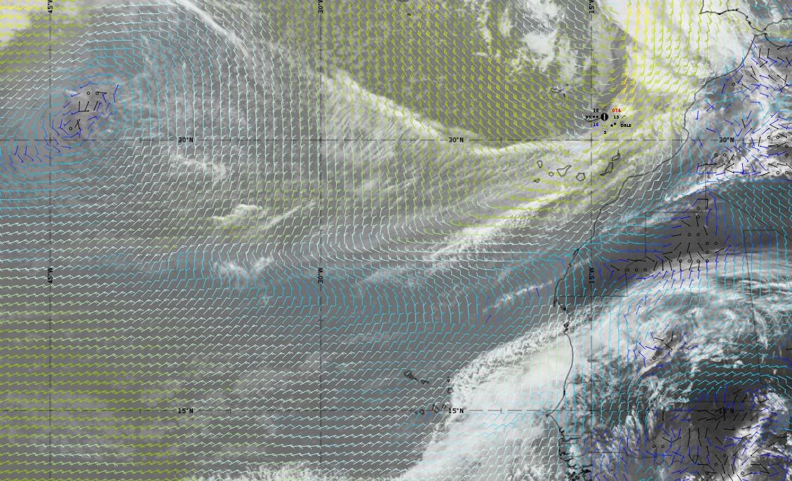 Surface wind from ECMWF model