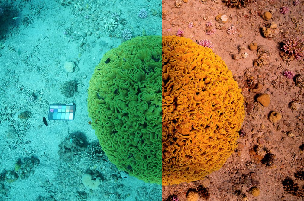 The method researchers at the University of Haifa are developing uses attenuation coefficients from Sentinel-3 to remove the effects of water from underwater images such as this example from a coral reef.
