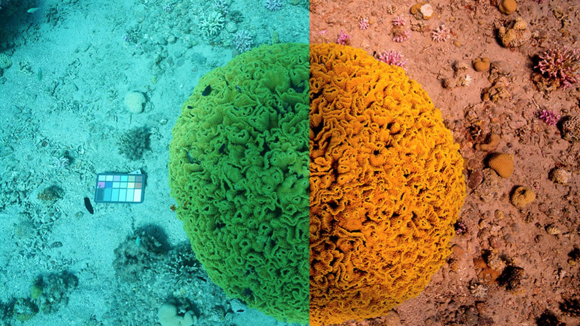 Underwater imaging enhanced with the help of Sentinel-3