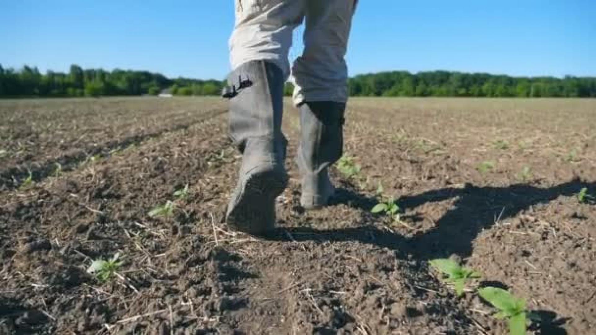 Farmer looking at dry soil