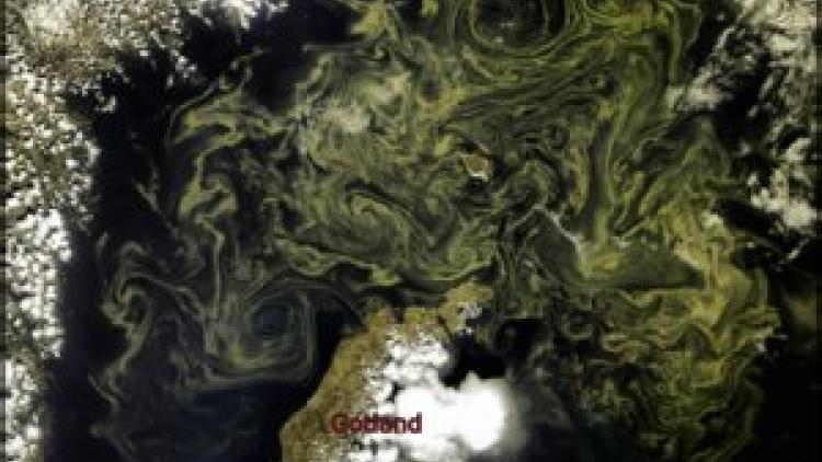 Swirls of cyanobacteria in the Baltic Sea
