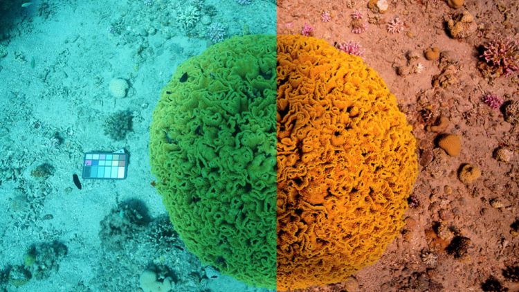 Underwater image of a coral reef