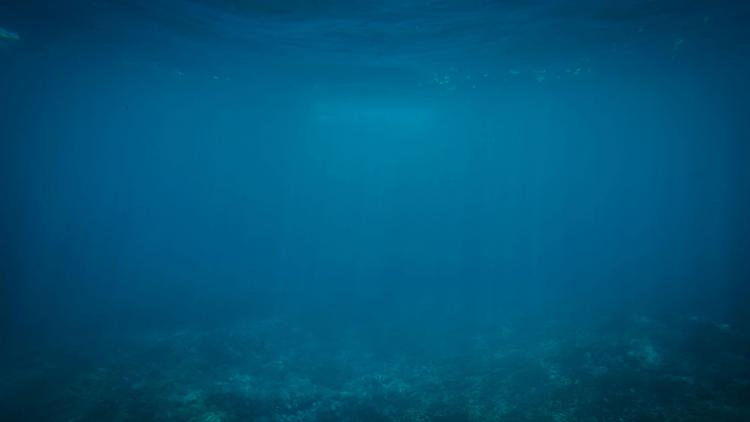 Below the ocean's surface