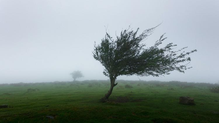 Trees in the wind and fog