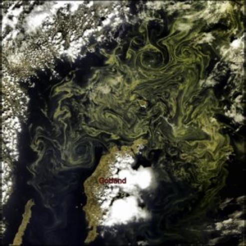 Swirls of cyanobacteria in the Baltic Sea