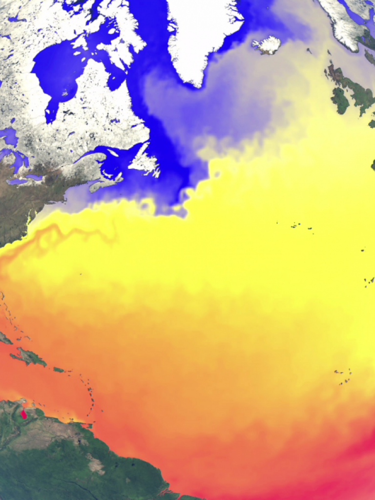 A year of Sea Surface Temperature